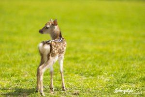 Ardmore Open Farm and Mini Zoo